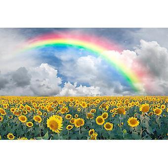 Wallpaper Mural Rainbow Sunflowers