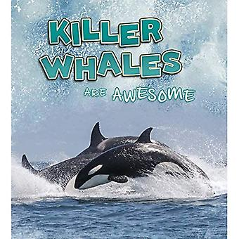 Killer Whales Are Awesome (A+ Books: Polar Animals)