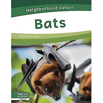 Neighborhood Safari: Bats
