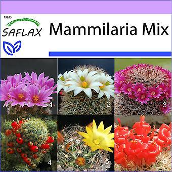 Saflax - 40 zaden - Mammillaire Mix - Mélange de Mammillaria - Mammillaria (mix) - Mezcla mammillaria - Mammilaria Mischung