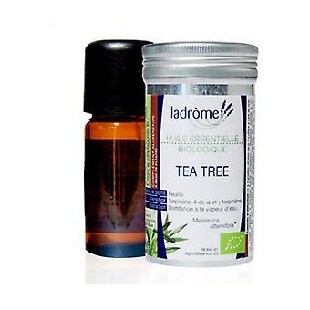 Tea tree 10 ml of essential oil
