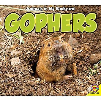 Gophers (Animals in My Backyard)
