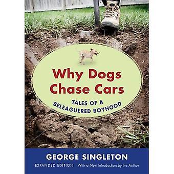 Varför hundar jaga bilar