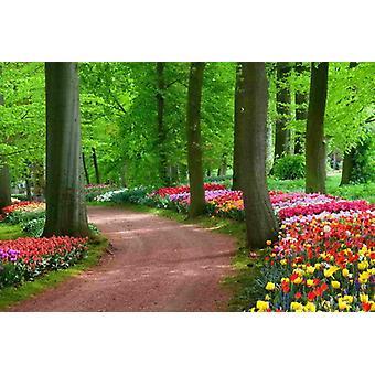 Tapete Wandbild Tulpen Frühling Landschaft