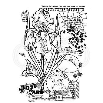 Woodware Clear Stamp Set Vintage Iris