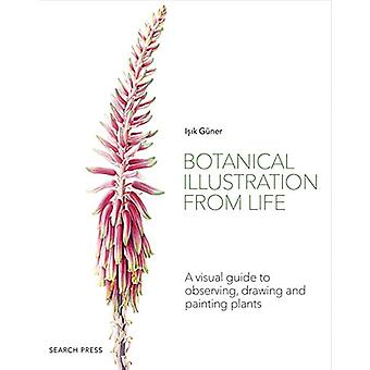 Botanical Illustration from Life - A Visual Guide to Observing - Drawi