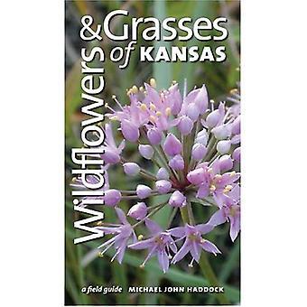 Vilda blommor och gräs av Kansas: en Fälthandbok