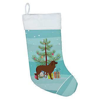 Portugalin lampaan koiran hyvää joulua puu joulu sukat
