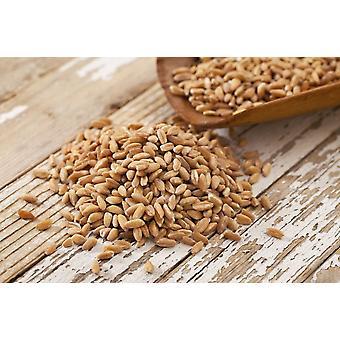 Barley Hulled -( 22lb )