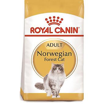 Royal Canin Norweigan Forest Cat (Cats , Cat Food , Dry Food)
