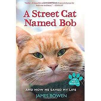 A Straße Katze namens Bob und wie er mir das Leben gerettet