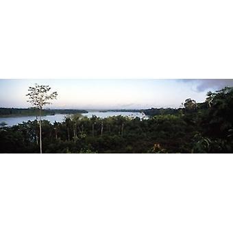 Puut metsässä Amazonin sademetsän Amazonin Peru Juliste Tulosta