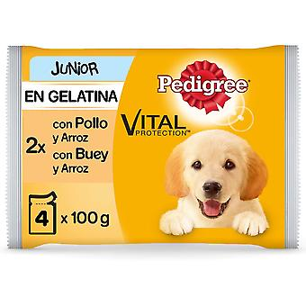 Pedigree Wet Food Junior Multipack of Chicken and Beef with Rice in Jelly