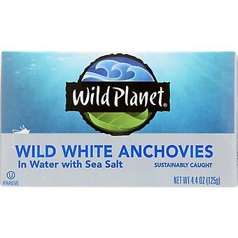 Wild Planet Anchovy White W Vesi, kotelo 12 X 4.4 Oz