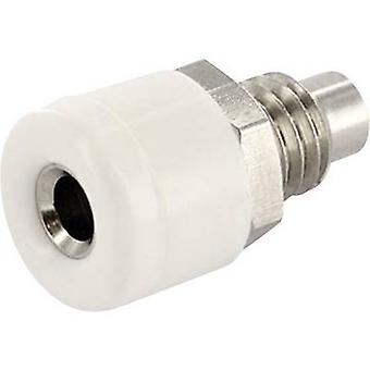 ECON koble HOBWS Jack kontakten kontakten, loddrett loddrett Pin diameter: 2.6 mm hvit 1 eller flere PCer