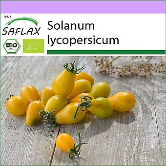 Saflax - 10 graines - Bio - Tomate - Yellow Submarine - BIO - Tomate - Yellow submarine - BIO - Pomodoro - Yellow Submarine - Ecol'oco - Tomate - Submarino Amarillo - BIO - Tomate - Yellow Submarine
