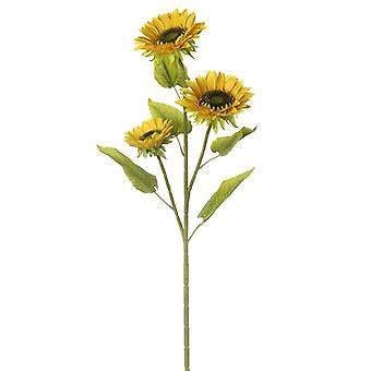 Sunflowers Stem