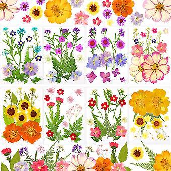 8 Sets Dried Flower Mini Dried Flowers Dried Flowers