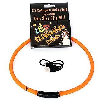 Animere omvandrende Mate LED blinkende Loop hund stykke legetøj