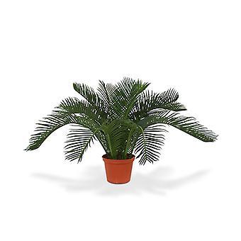 Keinotekoinen sycas vauva palmu N 50 cm