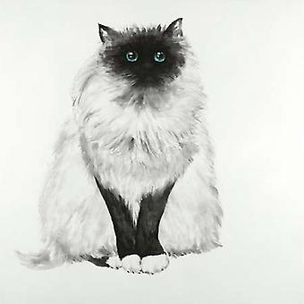 Blue Eyes Fluffy Siamese Cat Poster Print by Atelier B Art Studio