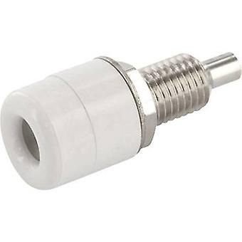 Econ ansluta TB4WS Jack socket Socket, vertikal vertikal Pin diameter: 4 mm vit 1 dator