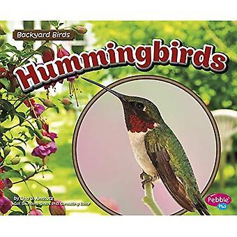 Kolibrier (bakgård fåglar)
