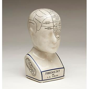 AA 59898 小さな骨相学の頭をインポートします。