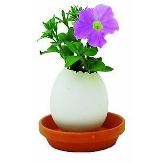 Eggling kruiden ei plant zaden rode Petunia Kräuterei ei