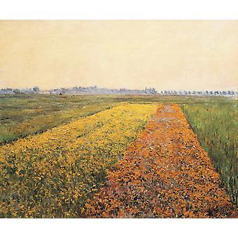 Geel veld, Gustave Caillebotte, 54x65cm