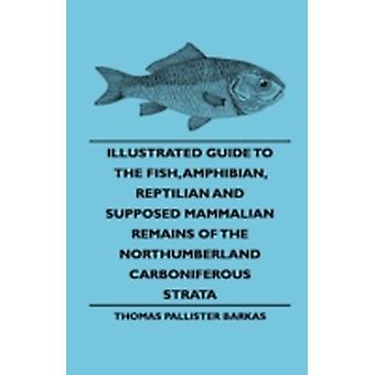 Illustrated Guide To The Fish Amphibian Reptilian And Supposed Mammalian Remains Of The Northumberland Carboniferous Strata by Barkas & Thomas Pallister