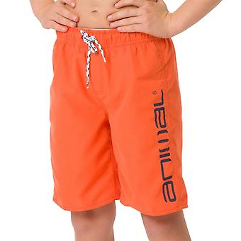 Animal Kids Tannar Boardshorts | Firecracker Orange