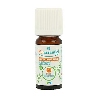 Eucalyptus radiata 10 ml of essential oil