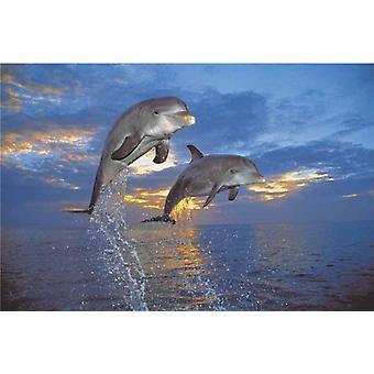 Poster - Studio B - 24x36 Flight of Two Dolphins Wall Art CJ3733