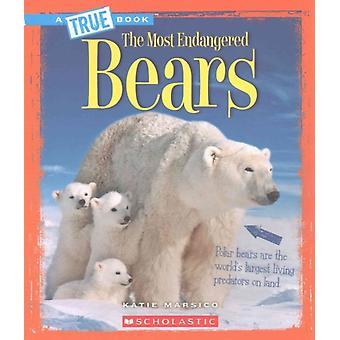 Björnar av Katie Marsico