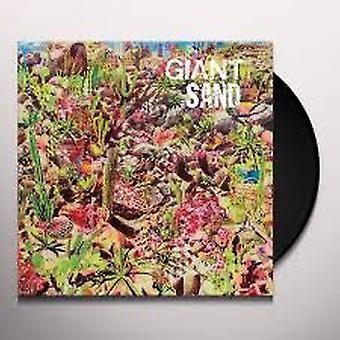 Giant Sand – Returns To Valley Of Rain Vinyl
