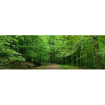 Road Through a Forest near Kassel Germany Poster Print