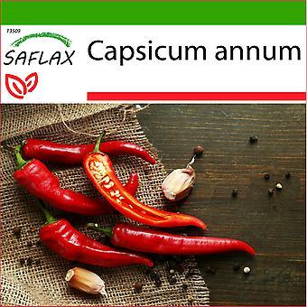 Saflax - 20 Samen - mit Boden - Chili - De Cayenne - Piment de Cayenne - Peperoncino di Cayenna - Chile de Cayenne - Chili - De Cayenne