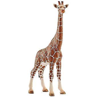 Ant farms female giraffe