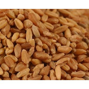 Organic Lundberg Long Grain Brow N Rice-( 24lb )