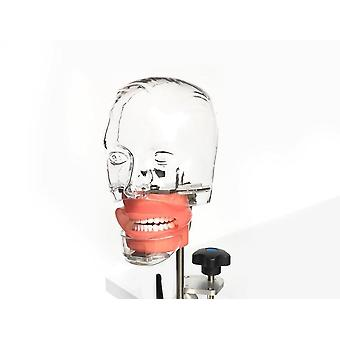 Dental Phantom Head Model Cu New Style Bench Mount Pentru Dentist Educație