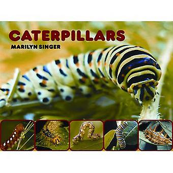Caterpillars by Marilyn Singer - 9780979745577 Book