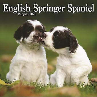 Englanti Springer Spaniel Pennut Mini Square Seinäkalenteri 2021