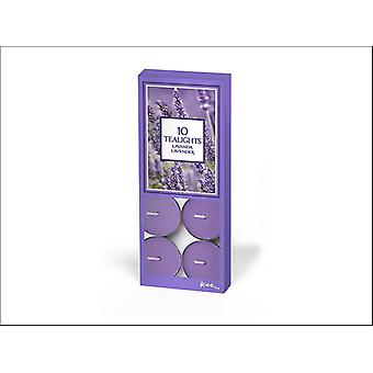 Prices Aladino Tealights Lavender x 10 ALT101013