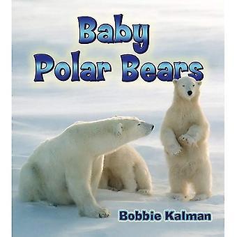 Baby isbjörnar: 19