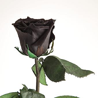 Eternal rose black with stem durable 3 years 45-50 cm