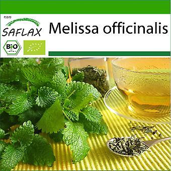 Saflax - 1000 graines - Avec sol - Bio - Mélisse - BIO - Mélisse officinale - BIO - Melissa - Ecológico - Melisa - BIO - Zitronenmelisse