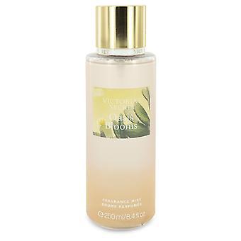 Victoria's Secret Oasis Blooms by Victoria's Secret Fragrance Mist Spray 8.4 oz