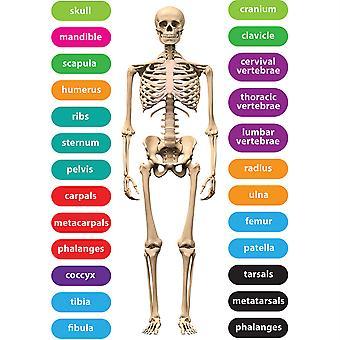 Die-Cut Magnetic Human Skeleton, 26 Pieces