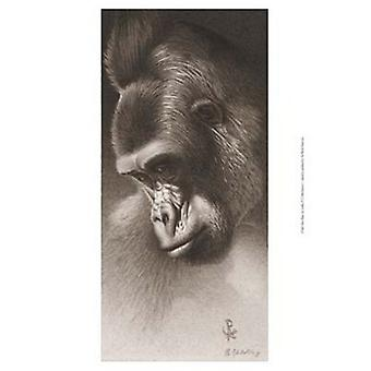 Silver Back the Gorilla Poster Print by Robert L Caldwell (13 x 19)